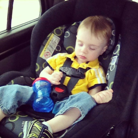 Mr. Party Animal fell asleep between the zoo and the park.