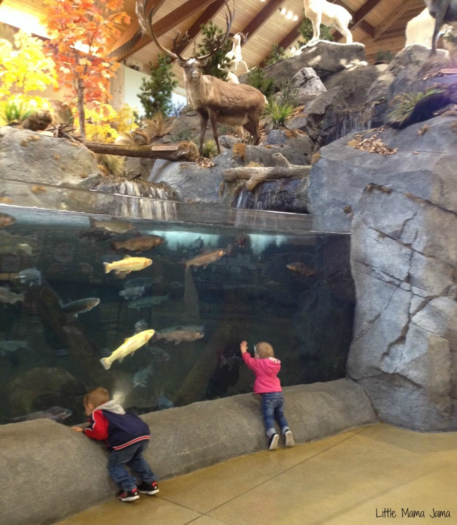 Toddler fun at Cabela's fish tank