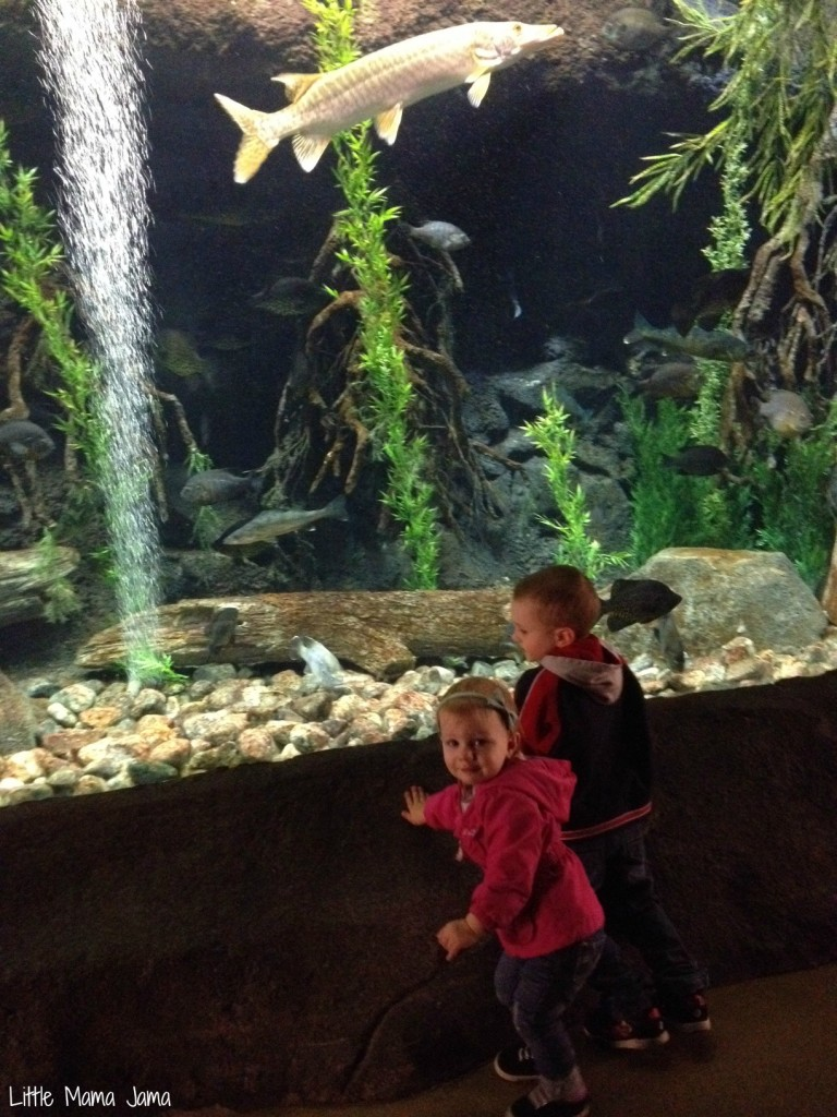 Toddler fun at Cabela's tunnel