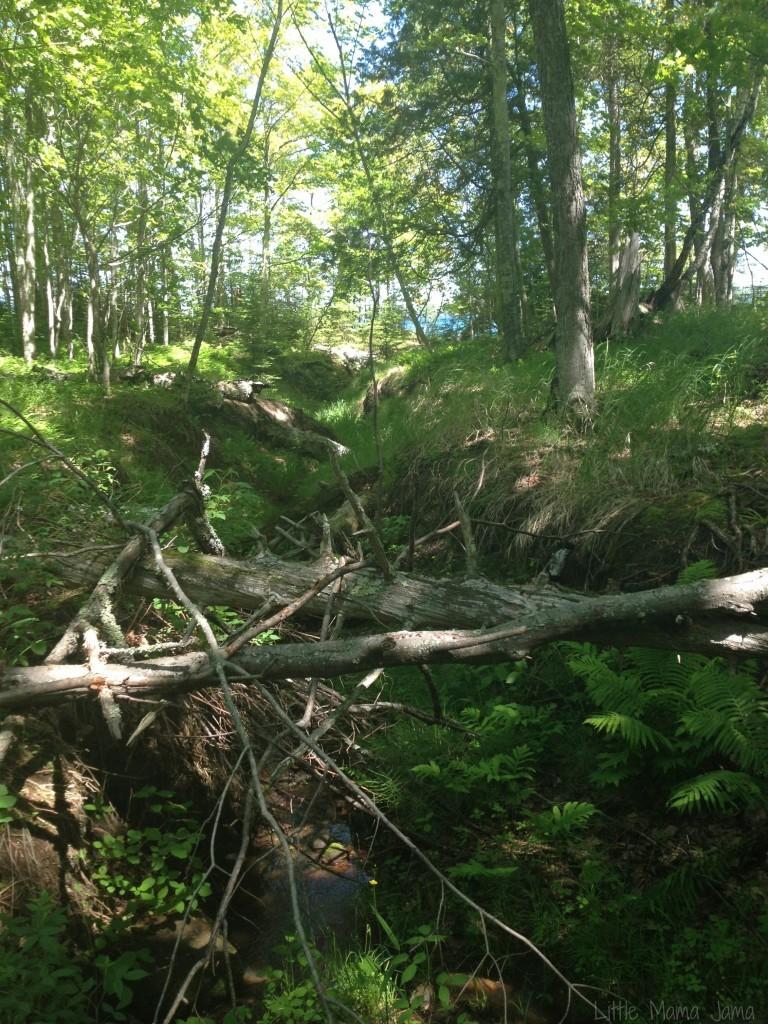 Trees at Big Bay State Park
