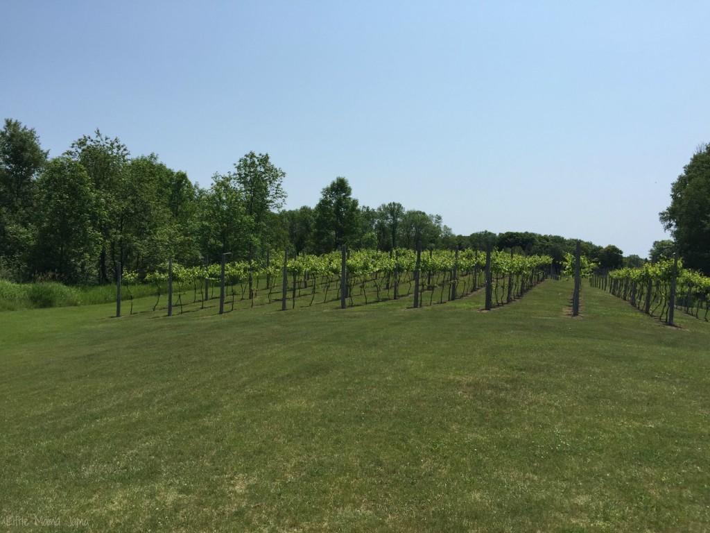 Simon Creek Winery vineyard in Door County