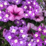 {KWW} My Grandma's Flowers